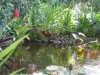 pond011