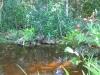 pond015